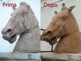 cavallo-6