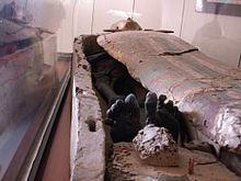 museo arche 27