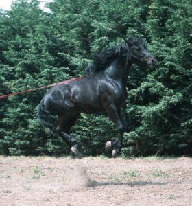 cavallo-20
