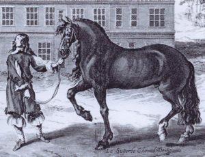 cavallo-25